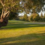 Golf_Course_3549
